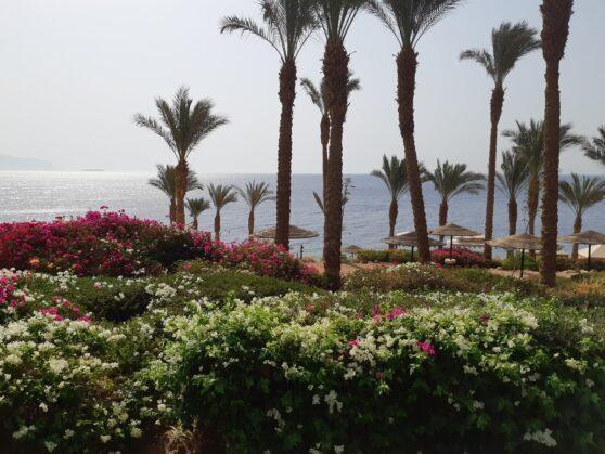 Пляж отеля Grand Rotana Resort and Spa